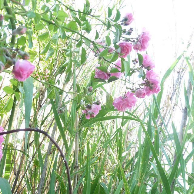 slow flower